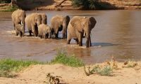 Elephants crossing a river