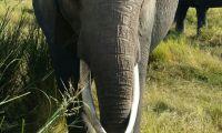 An elephans huge tasks