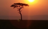 Sunset over a tree in the Kenya Masai Mara savannah