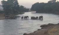 Elephants crossing the Mara River