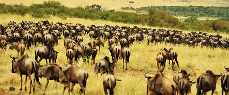 Mara Plains